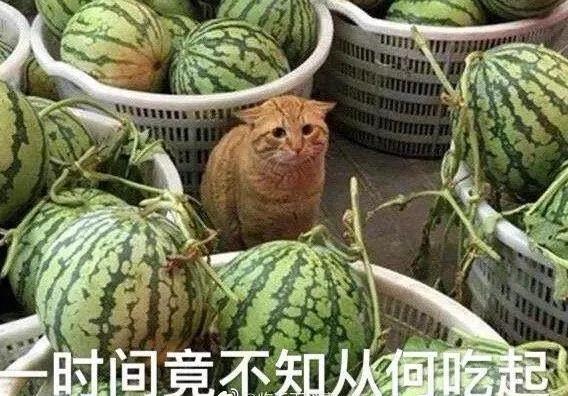 盘点娱乐圈最近的瓜~多到吃不完!!